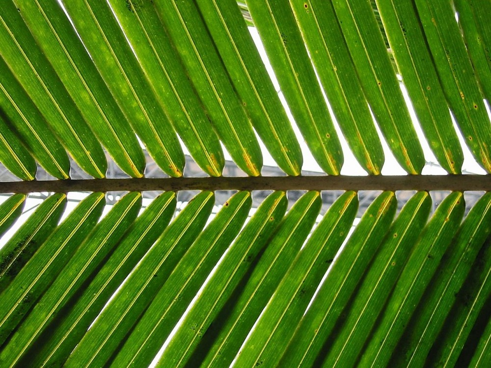 Coats Palm Branches Circe Institute